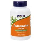 Astragalus, 500mg - 100 caps